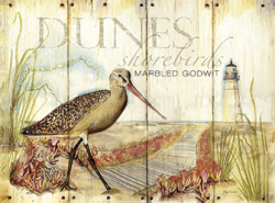 ציפור חוף בדיונותזן ציפורים, חוף , מגדלור, צמחיה, וינטג'