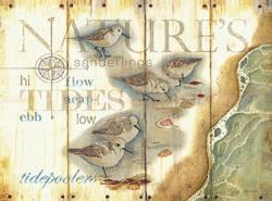 ציפור בגאותחוף, מצפן, ציפורים, זן,וינטג', רישום