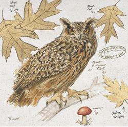 ינשוף 1ינשוף , עלים, ענף, רישום, טקסט, סוגי ינשופים, ציפורים