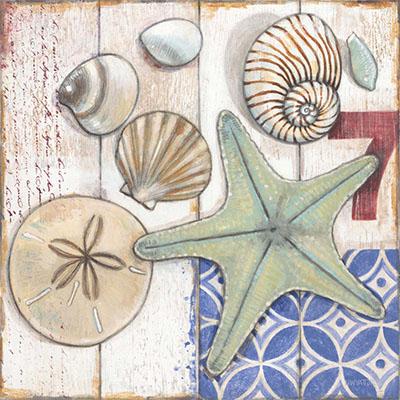 צדפים וכוכב ים59