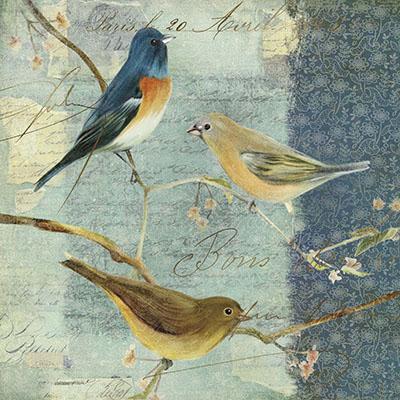 ציפוריםציפורים  45