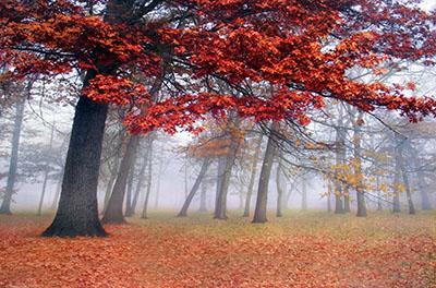 עצים אדמדמים