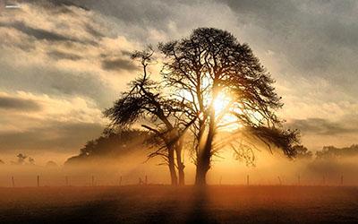 נוף  שקיעהעצים מדבר