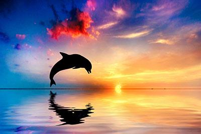 דולפין - שקיעה
