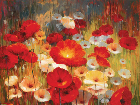 פרגים באחופרחים אדומים, שדה, אביב, פורח, פריחה, פרגים