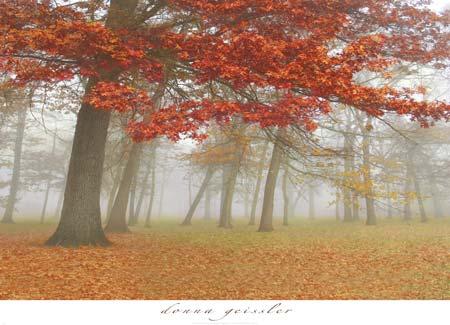 עצים, יער, גזעים, נוף, שלכת, עלים , חורשה , כתום , שדה , פרחים