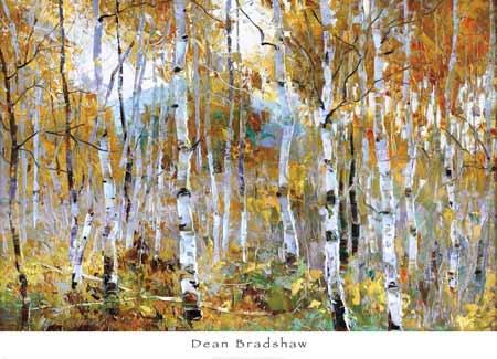 הקסם שבסתיוגזעים,גזע,עצים,יער, נוף, סתיו, חורף, רגוע, שליו, קפוא, עלים, שלכת