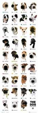 כלבים  אוסף  5