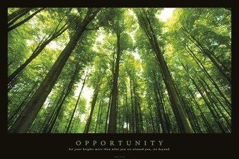 הזדמנות -מוטיבציהצילום, יער, מוטיבציה, עצים