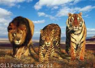 משפחת החתולים