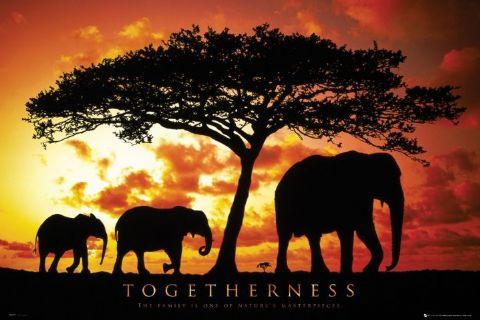 ביחדמשפחה פילים טבע צוות צעידה אתגר ספורט