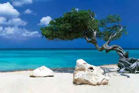 חוף לבןים חוף לבן דקלים חופים רוגע חופש סוטול כייף מנוחה   Divi Divi Tree Tom Makie
