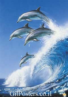 דולפינים לחופש נולדו