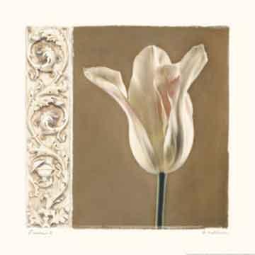 פרח לבןרומנטי עיצוב מודרני מינמליסטי שושן לבן צחור נקי