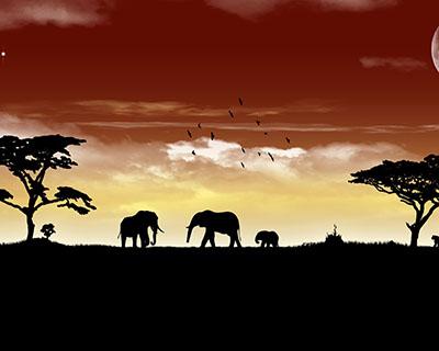 פיליםפילים