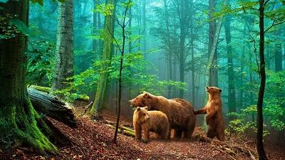 דוביםדובים
