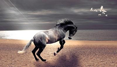 סוס  horseסוס  horse