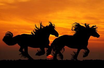 סוסים  horsesסוסים  horses