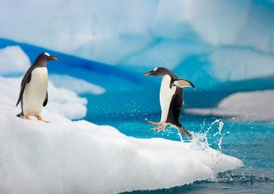 פינגווין penguinפינגווין penguin