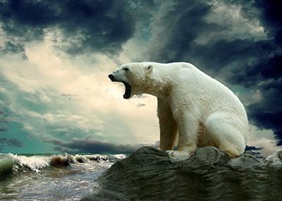 דב  bear הדב