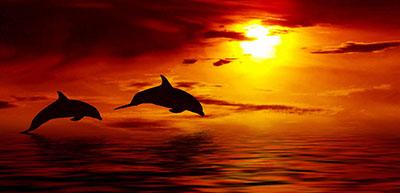 דולפיניםדולפין  דולפינים