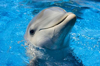 דולפין  דולפינים