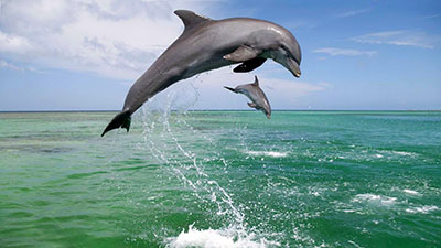 דולפינים דולפין  דולפינים   _dolphin_jump_water_sky_sea
