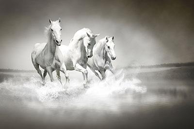 סוסים - Horsesסוסים - Horses   סוס 129
