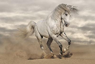 סוס - Horse  סוסים - Horses   סוס 129