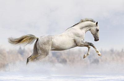 סוס - Horseסוסים - Horses   סוס 129