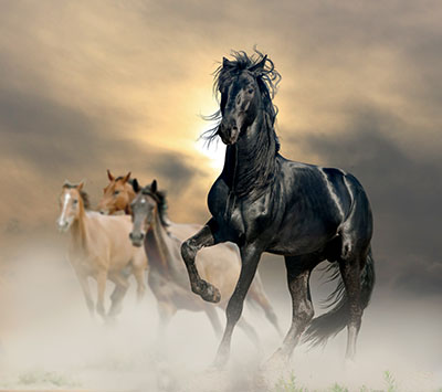 סוסים - Horses סוסים - Horses   סוס 129