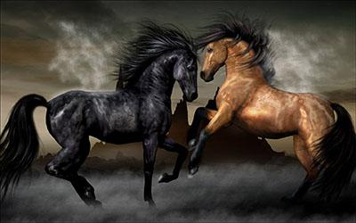 סוסים - Horsesסוסים - Horses   סוס 129 סוס - Horse