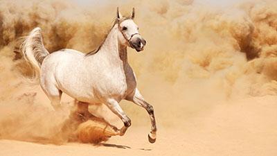 סוסים - Horses   סוס 129 סוס - Horse