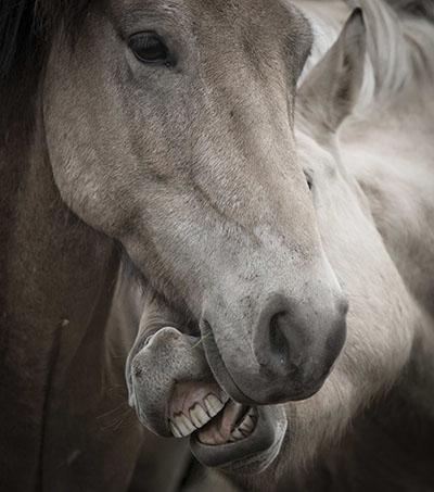 סוסים - Horses סוסים - Horses   סוס 129 סוס - Horse