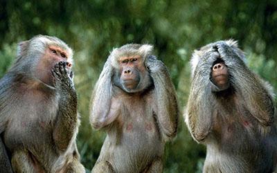 שלושת הקופים שלושת הקופים  -monkeys-funny