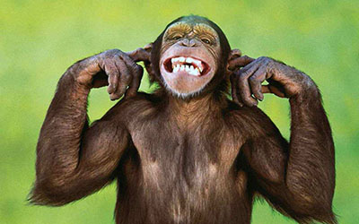 קוףקופים - תקשורת  הקוף    _Monkeys Snout Teeth
