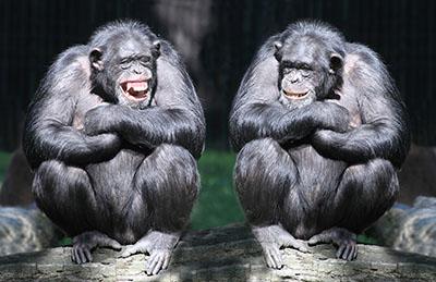 שני קופיםקופים - תקשורת  הקוף   _Monkeys_Two
