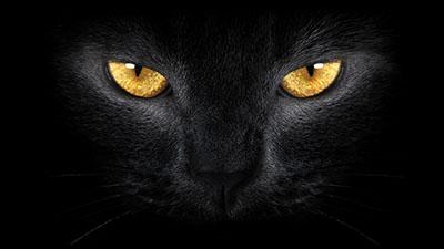 עיני חתול    חתולים  חתול    Cats Glance