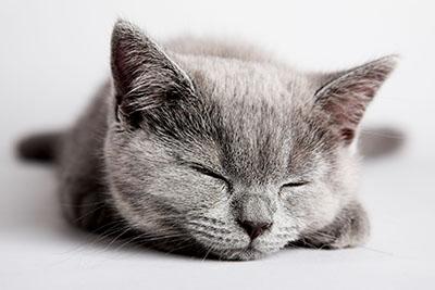 חתול   חתולים  חתול    Cats Glance