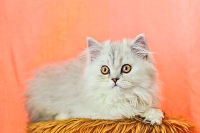 חתולים חתולים  חתול    Cats Glance
