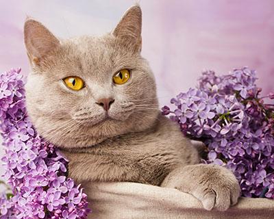חתולחתולים  חתול    Cats Glance