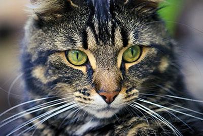 חתולים  חתול    Cats Glance