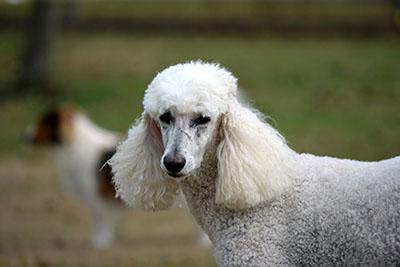 כלב  כלבים כלב  dog dogs   129