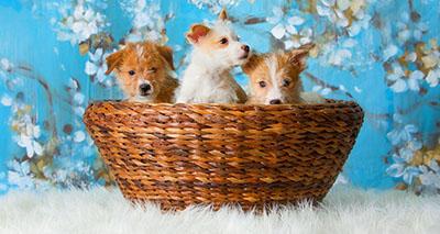 גורי כלבים כלבים כלב  dog dogs גורים  129