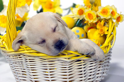 כלבכלבים כלב  dog dogs   129