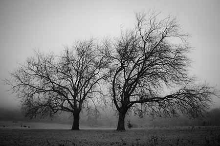 עציםנוף עירוני