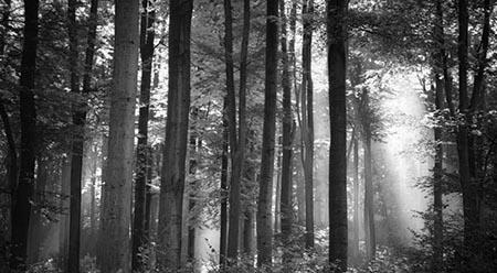 יער       עצים