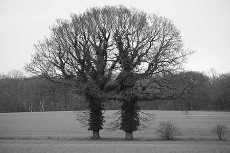 yin-and-yang-trees yin-and-yang-trees