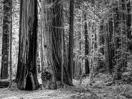 עצים עצים