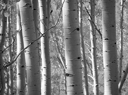 עציםעצים